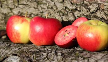 Apfeldiplom (4)